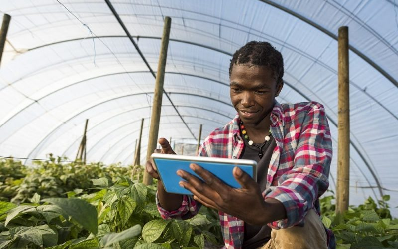 An surface level image of a young African Xhosa Male in his greenhouse vegetable garden, sits on his haunches while referencing information on his tablet.