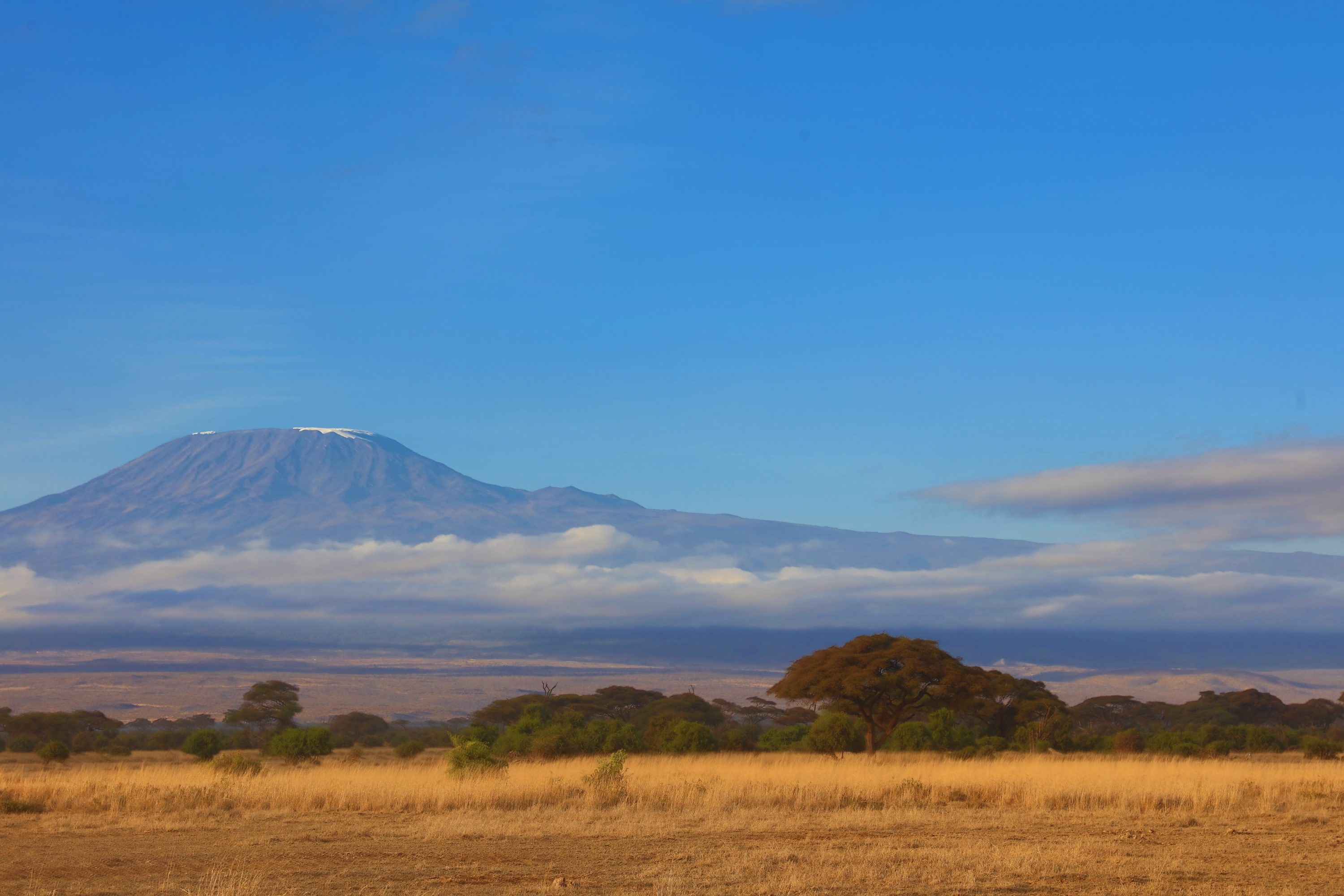 Scenic View Of Kilimanjaro In Kenya