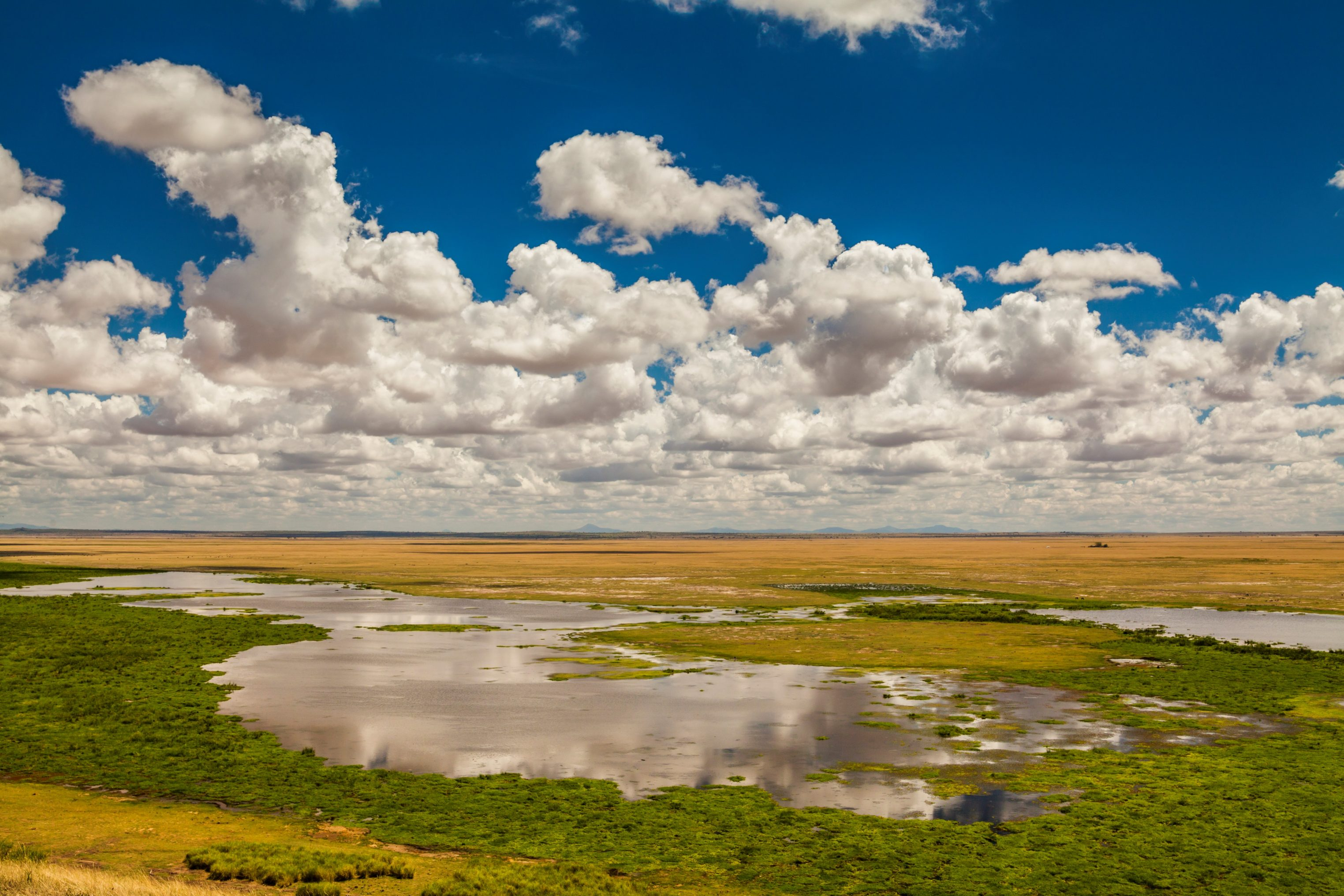 Amboseli National Park, Kenya, East Africa.