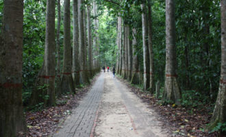 Four people walking on forest path.